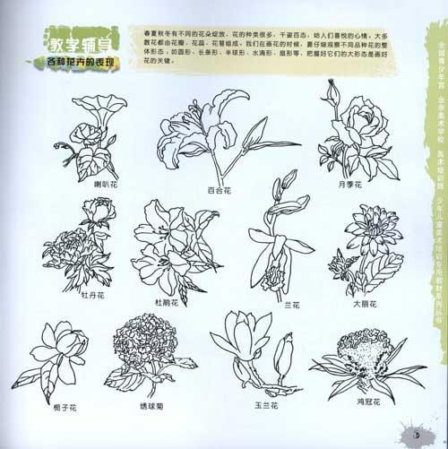 线描植物树木写生教程 左志丹 艺术 书籍