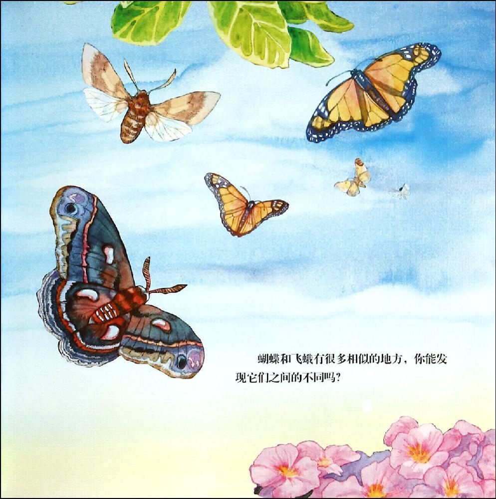 山麓和山脚的区别图示-动物比较 蝴蝶和飞蛾 看绘本学知识 动物比较 蝴蝶和 飞蛾 看 绘本 学知