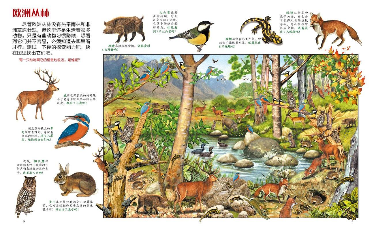 动物捉迷藏森林里的动物/动物捉迷藏