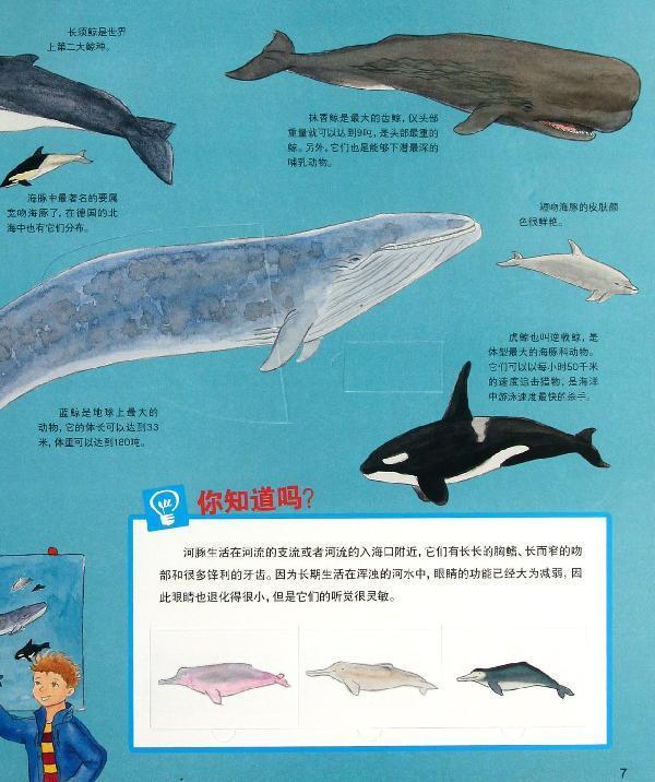 喷水可爱海豚简笔画
