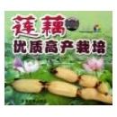莲藕优质高产栽培(VCD)