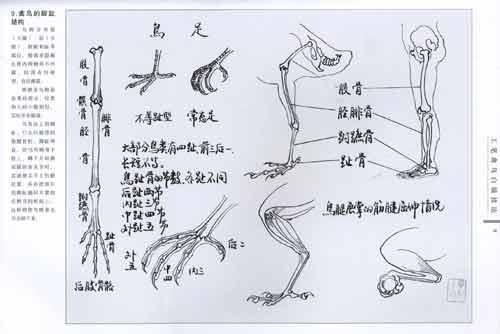 《工笔禽鸟白描技法》(毕彰)【简介|评价|摘要|在线