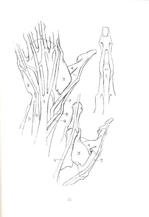 手骨结构图素描