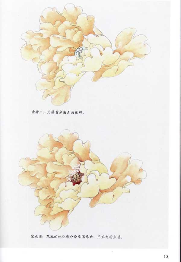 牡丹结构图 牡丹白描用笔 基本着色方法 其他着色方法 牡丹花蕾白描