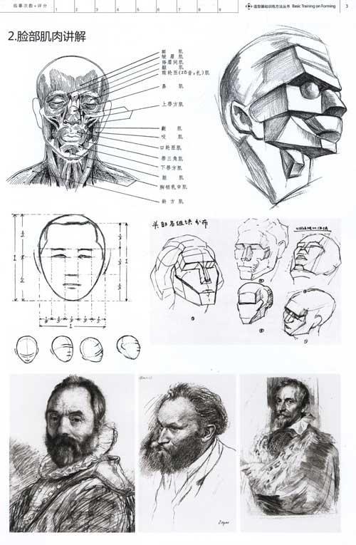 人物头像结构素描范本