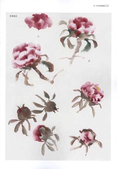 牡丹花的画法 第二节叶子的画法 &图片