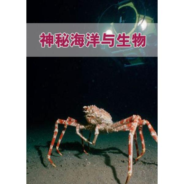 > 神秘海洋与生物