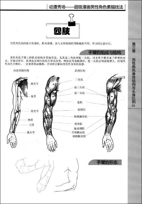 书摘插图; 躯干的肌肉结构 动漫秀场