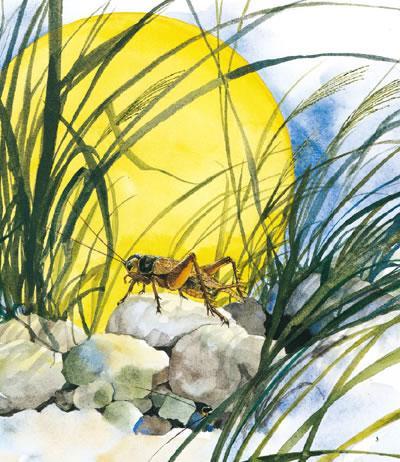 最美的法布尔蟋蟀记:漫画演奏家音乐-(日)小林昆虫路上图片