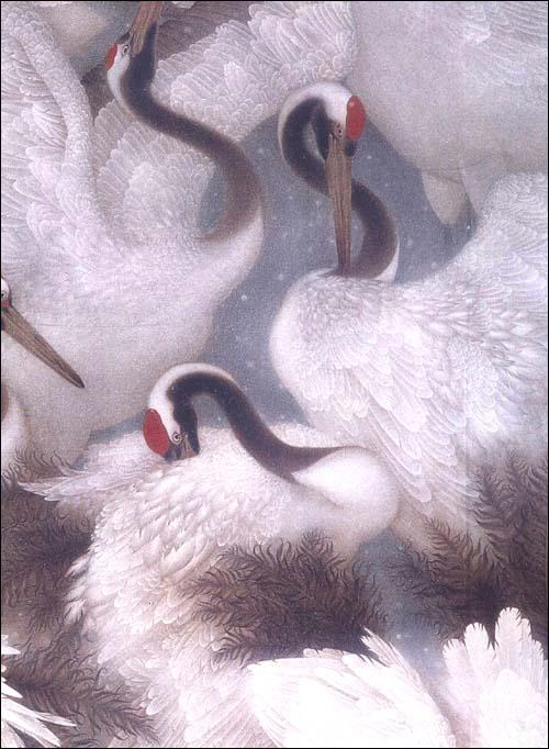 工笔仙鹤白鹭画法图片