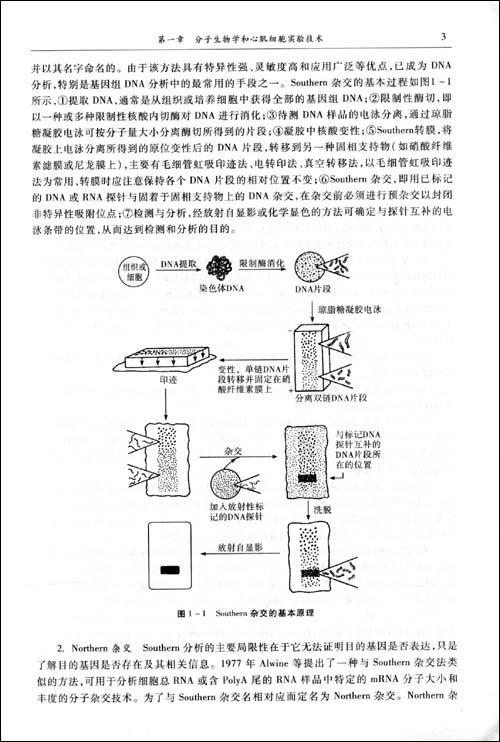 朱妙章等 医学 书籍     精彩内容      (四)pcr技术的扩展      在