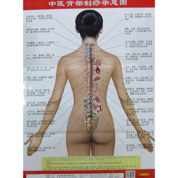 中医背部刮痧示意图--中医养生-文轩网