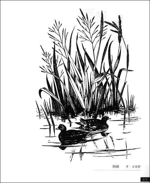 花卉黑白木刻版画; 英国黑白木刻;; 《英国黑白木刻》(刘新)【摘要 书