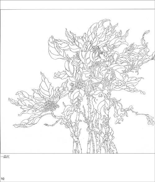 四月兰 银叶蕨