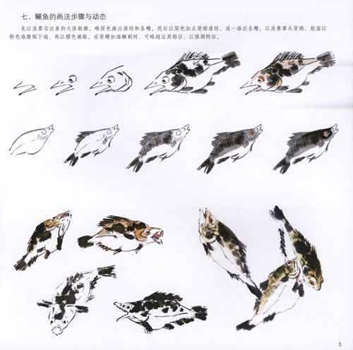 一,鱼的结构 二,红龙种金鱼的画法及不同姿态 1,设色画法 2,水墨画法图片