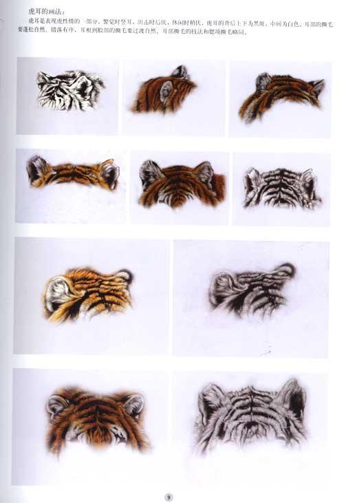 第二节 写实撕毛技法  第三节 虎局部画法示范  眼睛的画法  虎耳的