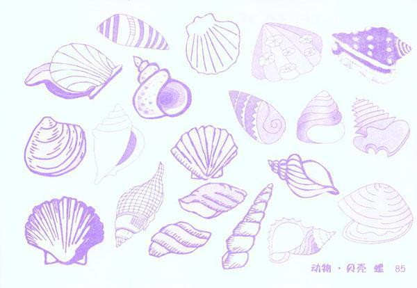 蝌蚪虾 贝壳螺
