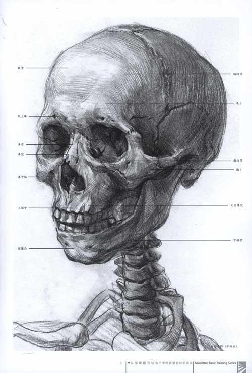 头部骨胳与结构/学院派基础训练临本-王斌-技法教程